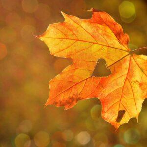 A ja lubię jesień – wersja instrumentalna.mp3